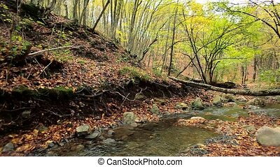 Forest River - Beautiful autumn forest with fallen leaves...