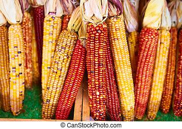 ramos, de, indio, maíz,