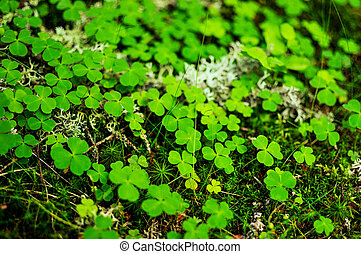 Close-up of moss and clovers - Close-up of moss, green...
