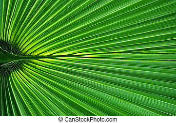 Palm leaf close-up great as a background