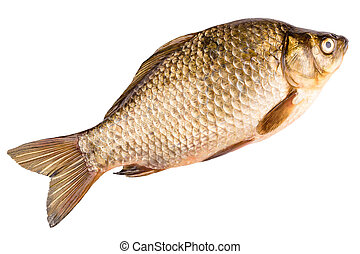 crucian isolated on white - the crucian isolated on the...
