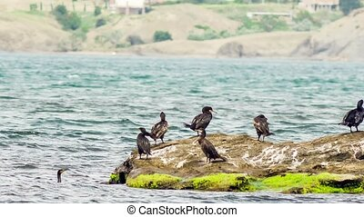 Cormorants In The Sea - Cormorants on a rock in the sea