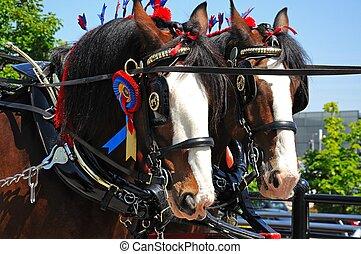 Shire horses with headgear.