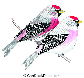 Common and Hoary Redpoll - Common Hoary Redpolls - Acanthis...