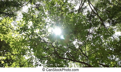Sun Light Get Through Green Tree, Stock Video