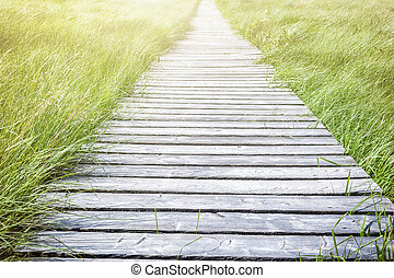 Wooden plank board walkway surrounded by green grass