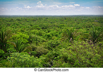 Rain Forest - Overhead View of the Rain Forest