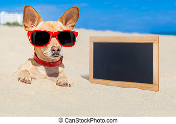 dog buried in sand - chihuahua dog buried in a hole in the...