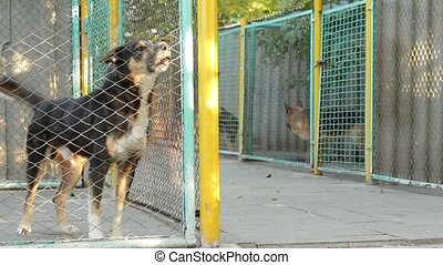 Dogs In A Cage - In the dog shelter contains various dogs