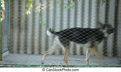 Dog Barks From The Cell - The poor dog is barking out of his...