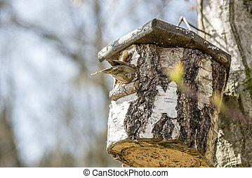 Bird sitting on a nesting box in a tree in the garden made...
