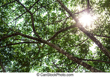 Under the tree with branch and green leaves