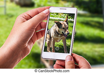 dog phone photography - a woman using a smart phone to take...