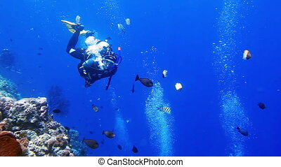 Diver makes OK sign in the blue with school of tropical fish...