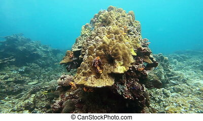 School of fish on the yellow pore coral