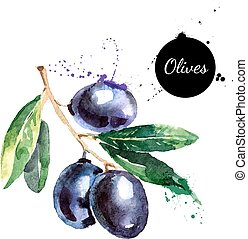 Hand drawn watercolor painting olives on white background -...