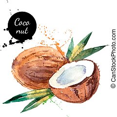 Hand drawn watercolor painting fruit coconut on white...