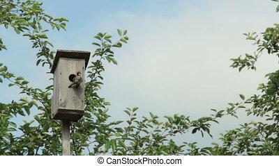 Birdhouse with bird on the tree