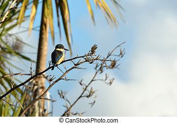 Sacred kingfisher sit on a flax plant in the bush of New...