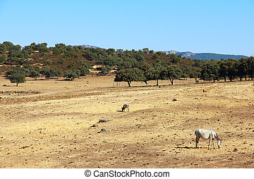 Andalusian horses on pasture - Purebred andalusian spanish...