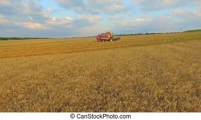 AERIAL VIEW. Combine On Harvest Field in Ukraine. Wide Angle Shot.
