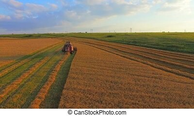AERIAL VIEW. The Harvesting Machine Mows Wheat
