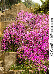 Purpule flowers on a stone stairs in the nature park -...