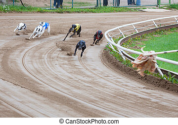 Greyhound dogs racing on sand track