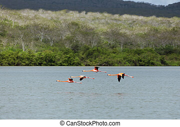 Hedgehopping flamingos - Flamingos hedgehopping over the...