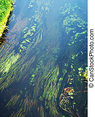 forest river algae in cold clear waters Ukraine