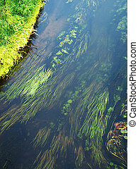 forest river algae in cold clear waters. Ukraine
