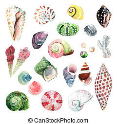 Watercolour Seashells - Watercolour illustrations of various...