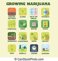 Marijuana growing icon set. Medical cannabis plants...