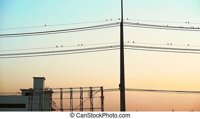 Flock of birds sitting on wires - Vertical electric pole and...