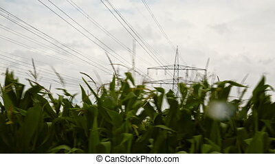 cornfield with electrical tower