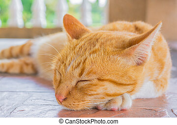 bastante, gato, sueño, en, exterior, el, hou,