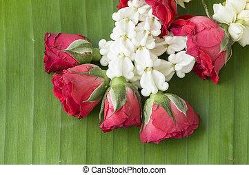 rose closeup flower floral beauty nature concept - rose...