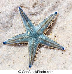 Starfish on beach seaside asia Thailand
