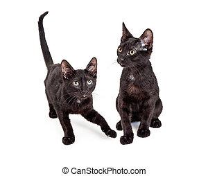 Two Cute Little Black Kittens