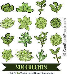 Vector Succulents Hand Drawn 16 Set Seamless Pattern -...