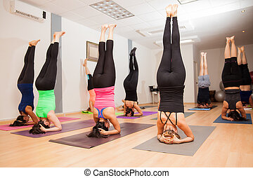 Large yoga group doing a headstand - Wide view of a large...