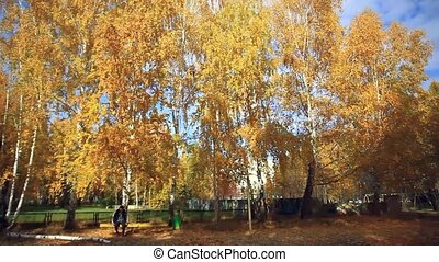 Older man sitting on the bench in autumn park . HD....