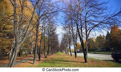 Woman walking in the autumn park at road