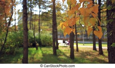 Blurred background of woman with a child sitting on the bench and other mom walking With baby carriage in park autumn in foreground focused birch branches