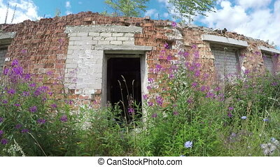 rural house ruins with wild flowers