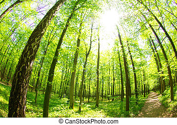 nature - Early morning sun in the green forest...