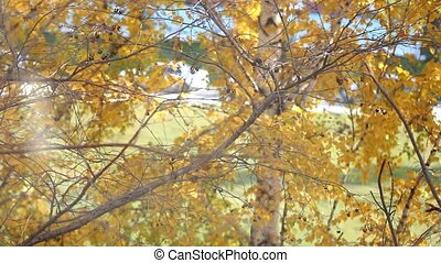 Branch with yellow leaves. Autumn concept.