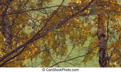 Branch with yellow leaves. Autumn concept. Change focus...