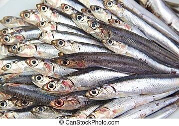 Fresh raw mediterrean anchovies - Close up of fresh raw...