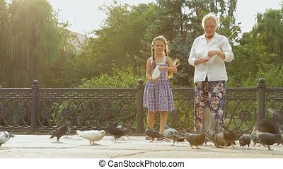 Doves In A Park - People feeding doves in a park